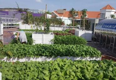Thi công trồng rau sạch tại nhà