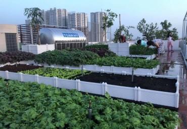 Chậu ghép trồng rau thông minh – Đẹp – Độ bền cao