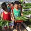 Làm vườn rau sạch cho trẻ tại trường mầm non