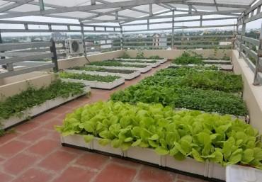 Vườn trên tường, vườn thẳng đứng Công ty Quanh Anh