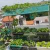 Địa chỉ mua chậu ghép trồng rau thông minh tại Hà Nội