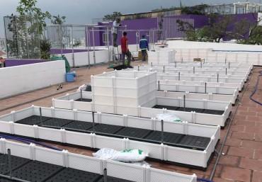 Cận cảnh thi công công trình vườn trên sân thượng