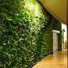 Top 5 mẫu vườn tường đứng đẹp, nổi bật năm 2019
