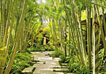 Những thiết kế sân vườn cho miền nhiệt đới