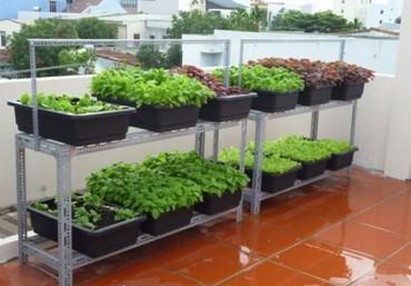Sử dụng chậu ghép trồng rau thông minh trong thi công vườn trên sân thượng