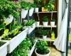 Tại sao nên chọn khung chậu trồng rau thông minh