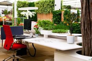 Những mẫu văn phòng xanh độc đáo kết hợp hài hoà với cây xanh