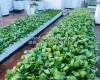 Sử dụng vỉ thoát nước hiệu quả trên cao cho vườn rau sạch
