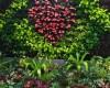 Cây trồng được trang trí cho vườn trên tường