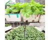 5 lý do khiến bạn trồng rau bằng chậu ghép thông minh