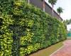 Trang trí tường rào sân vườn biệt thự, trung tâm thương mại bằng tường cây xanh