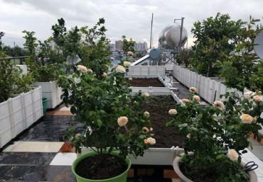Ứng dụng chậu ghép thông minh vườn trên sân thượng