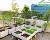 Vườn trên mái – Giải pháp chống nóng hiệu quả cho mùa hè