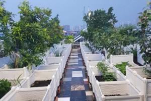 Địa chỉ bán chậu ghép trồng rau giá rẻ và chất lượng tại Hà Nội