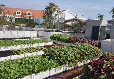 Kinh nghiệm trồng rau trên sân thượng hiệu quả
