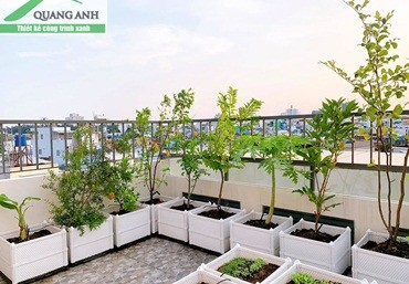 Mách bạn 4 mô hình trồng rau thông minh tại nhà