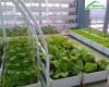 Kỹ thuật trồng rau sạch tại nhà đúng cách