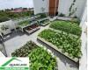 Quang Anh Hà Nội cung cấp chậu nhựa thông minh trồng rau giá rẻ nhất