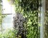 Biến ban công nhỏ thành khu vườn xanh mát với modul vườn đứng Quang Anh