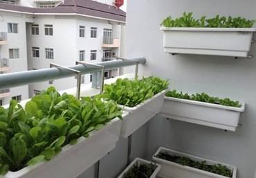 Các mô hình trồng rau sạch tại nhà phổ biến hiện nay