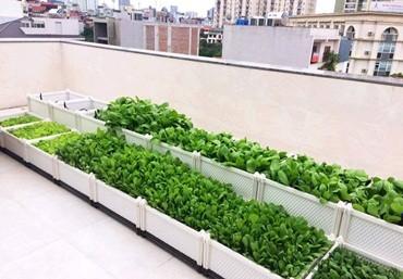 Chậu ghép trồng rau thông minh, trồng cây giá rẻ tại Hà Nội