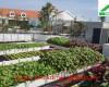 Chậu ghép thông minh – giải pháp trồng rau trên mái hiệu quả