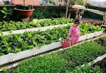 Lợi ích khi cho trẻ chăm sóc và tưới cây – công ty Quang Anh Hà Nội