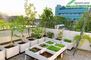 Cửa hàng bán chậu nhựa trồng rau sạch giá rẻ nhất Hà Nội