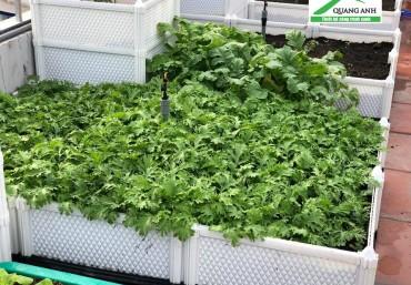 Gợi ý mô hình trồng rau sạch tại nhà với chi phí tiết kiệm