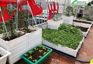 Mua chậu ghép trồng rau thông minh tốt nhất tại Hà Nội