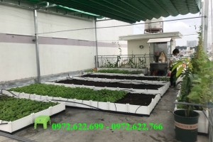 Bật mí kinh nghiệm trồng rau trên sân thượng