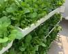 Mua chậu trồng rau ban công giá rẻ nhất Hà Nội