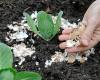 Mẹo vặt làm vườn mà người tự trồng rau tại nhà nên biết