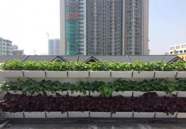Trồng rau ban công đón Tết với modul vườn đứng QA03-04 Quang Anh Hà Nội