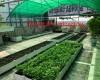 Lợi ích của mô hình trồng rau sạch tại nhà hiện nay