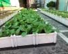Mua chậu trồng rau trên sân thượng ở đâu giá rẻ nhất?