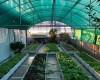 Kỹ thuật trồng rau trên sân thượng hiệu quả nhất với chậu ghép thông minh
