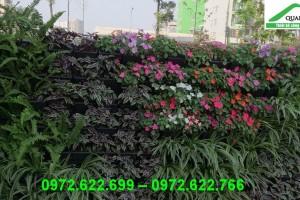 Trồng hoa đón tết 2021 với modul vườn đứng QA01 Quang Anh Hà Nội