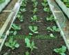 Hướng dẫn cách cải tạo đất trồng rau sân thượng trở nên tơi xốp
