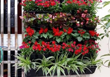 Mua modul vườn tường đứng rẻ nhất Hà Nội