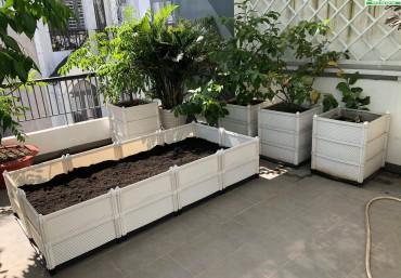 Nên chọn đất trồng rau loại nào tốt?