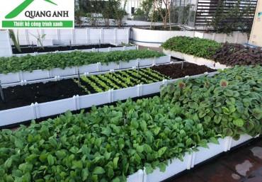 Vườn rau sử dụng chậu ghép trồng rau Quang Anh Hà Nội