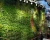 Mua modul vườn tường QA05 giá rẻ tại Hà Nội