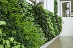 Vườn thẳng đứng nơi không gian thiên nhiên tới ngôi nhà của bạn