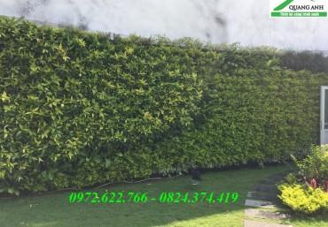 Vườn trên tường đẹp với modul vườn đứng Quang Anh Hà Nội