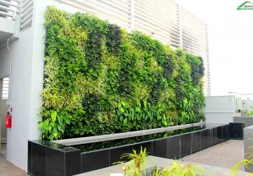 Trang trí vườn tường biệt thự với modul vườn đứng Quang Anh