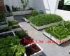 Top các loại rau dễ trồng trên sân thượng nhà phố