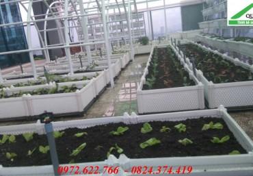 Mua chậu trồng rau thông minh chất lượng, ưu đãi hấp dẫn