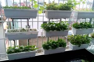Kinh nghiệm sử dụng chậu ghép trồng rau thông minh, đúng cách nhất