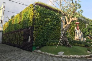 Vườn đứng là gì? Cách để tạo vườn đứng của riêng mình.